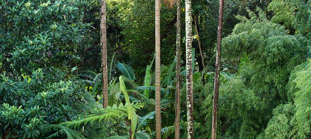 柿「Sub tropical Suburban Garden Sydney」:スマホ壁紙(8)
