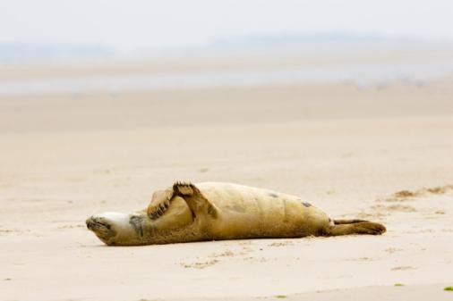 Tim Graham「Common Grey Seal, Norfolk Broads, UK」:スマホ壁紙(12)