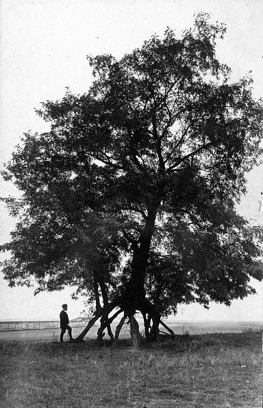 Tropical Tree「Stilt Acacia」:写真・画像(8)[壁紙.com]