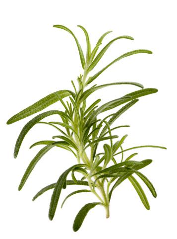"Side View「Rosemary ""Barbeque"" (Rosmarinus officinalis)」:スマホ壁紙(19)"