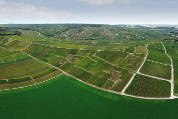 Green Vineyards of Burgundy, France:スマホ壁紙(壁紙.com)
