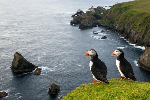 Love - Emotion「Atlantic puffins at clifftop edge」:スマホ壁紙(11)