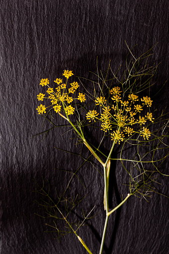 Fennel「Yellow fennel umbels」:スマホ壁紙(2)