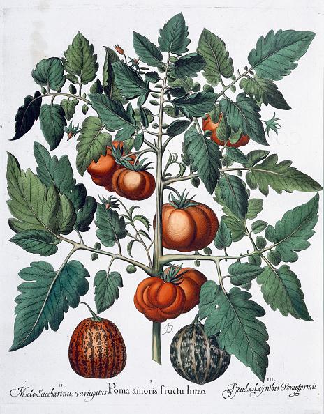 メロン「Tomatoes And Melons 1613」:写真・画像(0)[壁紙.com]