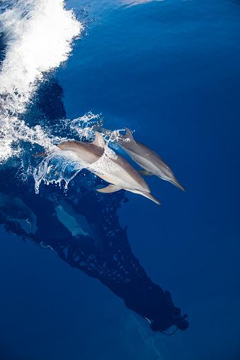 イルカ「Dolphins」:スマホ壁紙(2)