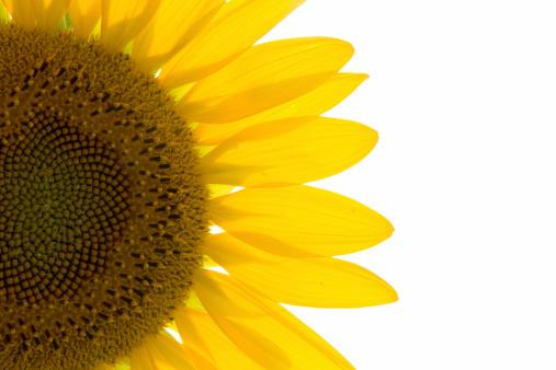 ひまわり「太陽のアイテム」:スマホ壁紙(1)
