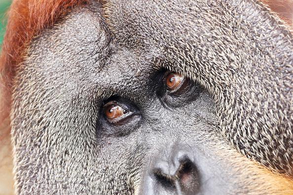 Concepts & Topics「Behind The Scenes At Sydney Zoo」:写真・画像(17)[壁紙.com]