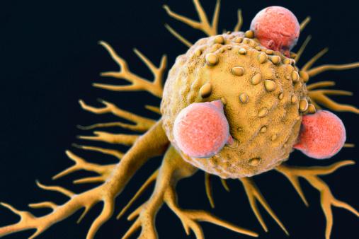 WBC「T Lymphocytes と動物ガン細胞」:スマホ壁紙(17)