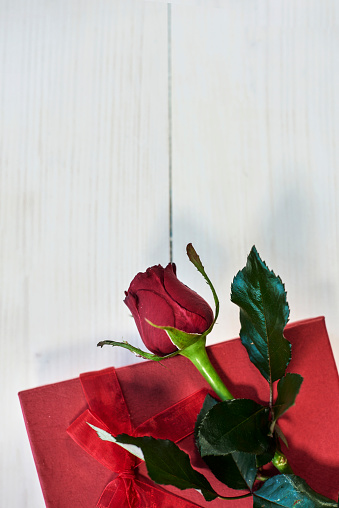 Rose - Flower「Red rose and cute present. Debica, Poland」:スマホ壁紙(8)