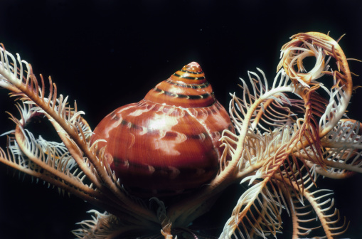 snails「Snail on Crinoid」:スマホ壁紙(11)