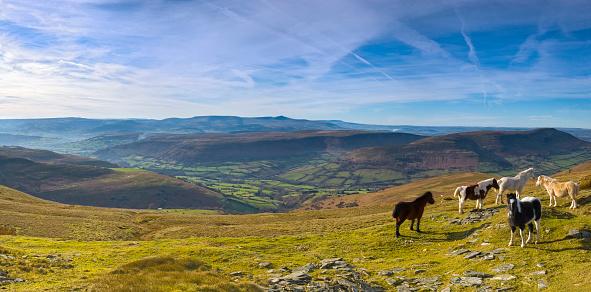 Stallion「Mountain ponies, green valleys, blue horizon」:スマホ壁紙(3)
