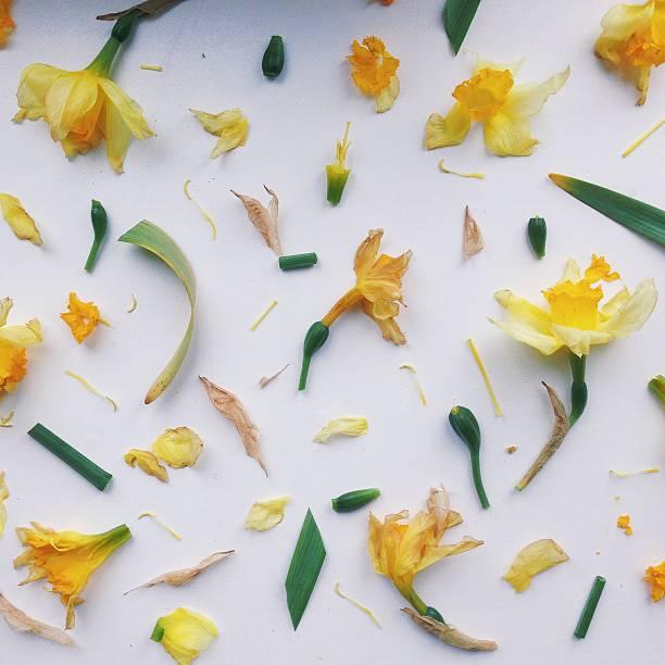 模様の花の部分:スマホ壁紙(壁紙.com)
