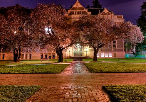 夜桜「Univeristy ワシントンの夜」:スマホ壁紙(7)