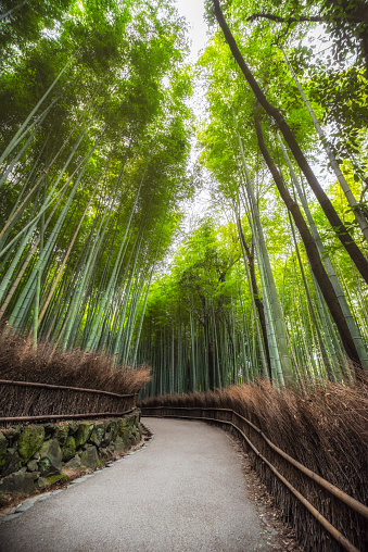 Kyoto City「Empty Arashiyama Bamboo Forest in Kyoto, Japan」:スマホ壁紙(14)
