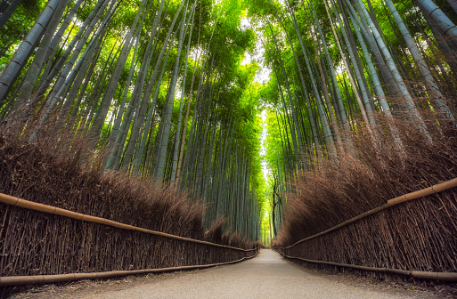 Kyoto City「Empty Arashiyama Bamboo Forest in Kyoto, Japan」:スマホ壁紙(15)
