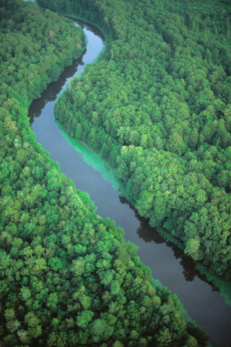 オカラ国有林「River running through forest」:スマホ壁紙(0)