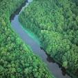 Ocala National Forest壁紙の画像(壁紙.com)