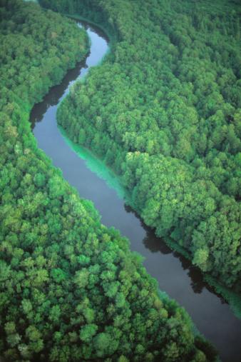 Ocala National Forest「River running through forest」:スマホ壁紙(3)