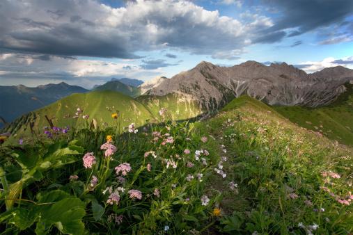 Lech Valley「alpine summer meadows」:スマホ壁紙(3)