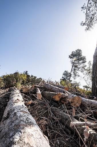Fallen Tree「global warming」:スマホ壁紙(16)