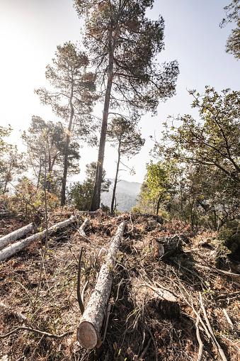 Fallen Tree「global warming」:スマホ壁紙(15)