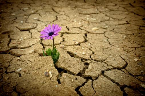 Wildflower「Global warming」:スマホ壁紙(1)