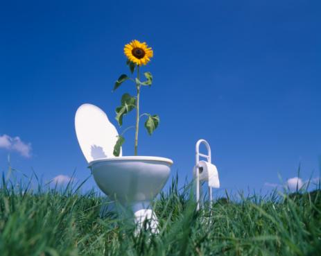 Toilet Roll Holder「Sunflower (Helianthus annuus)in toilet in field, low angle view」:スマホ壁紙(15)