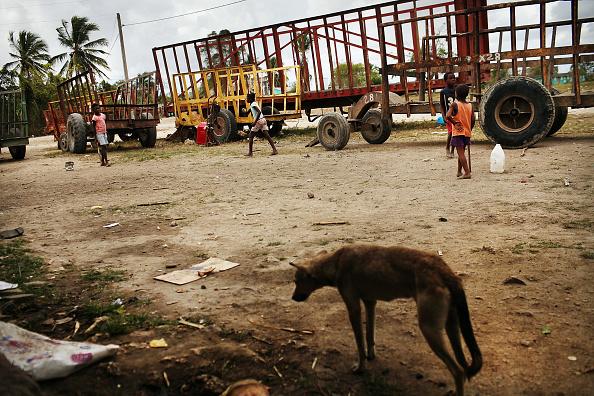 Grass Family「Haitians Live Precarious Existence on DR Agricultural Plantations」:写真・画像(18)[壁紙.com]