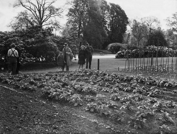 Vegetable Garden「Food-Growing Advice At Kew」:写真・画像(6)[壁紙.com]
