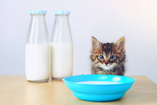 Whatever the question, the answer is milk:スマホ壁紙(壁紙.com)