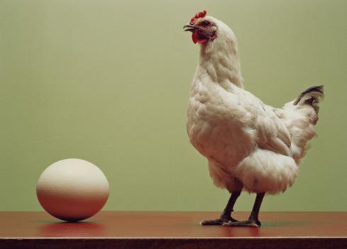Animal Egg「Chicken standing on table by large egg (Digital Enhancement)」:スマホ壁紙(9)
