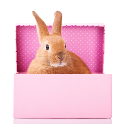 Baby Rabbit「Bunny in the box」:スマホ壁紙(12)