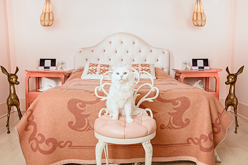 Indulgence「White cat sitting on chair in bedroom」:スマホ壁紙(8)
