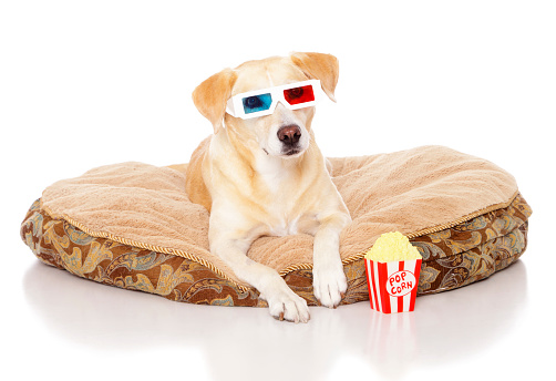 Watching TV「Dog with 3D Glasses」:スマホ壁紙(16)