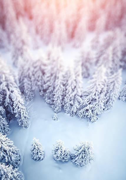 Idyllic Winter Background:スマホ壁紙(壁紙.com)