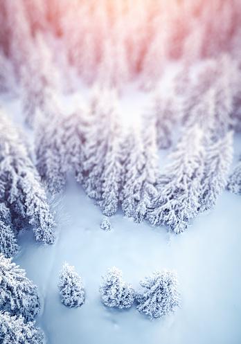 冠雪「のどかな冬の背景」:スマホ壁紙(6)