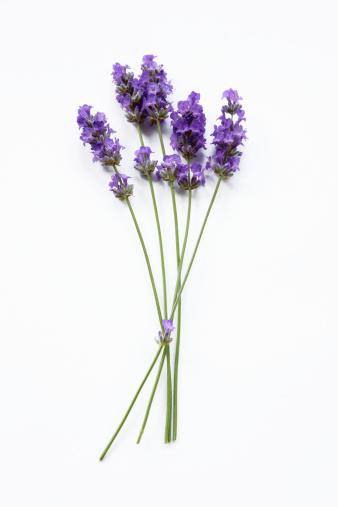 Plant Stem「Stems of lavender flowers」:スマホ壁紙(15)