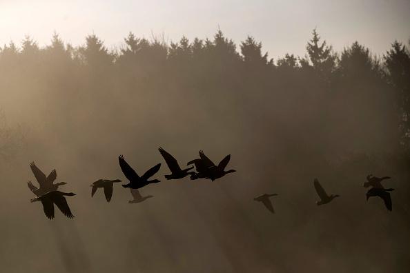 トップランキング「Geese Fly Through Morning Mist」:写真・画像(7)[壁紙.com]