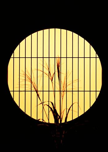 日本の祭り「Japanese Pampas Grass」:スマホ壁紙(5)