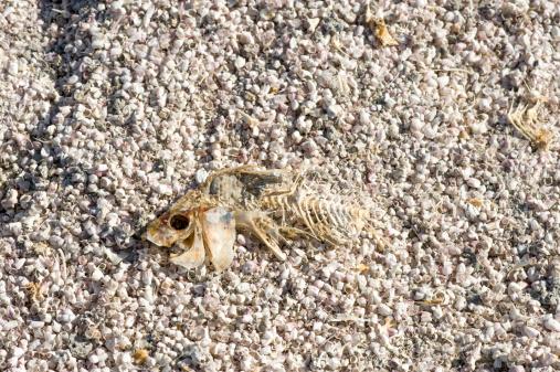 Photoshot「Dead fish at the Salton Sea」:スマホ壁紙(18)
