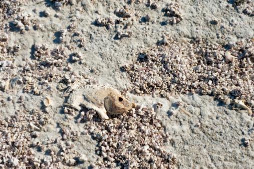 Photoshot「Dead fish at the Salton Sea」:スマホ壁紙(17)