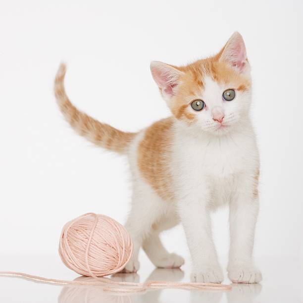Kitten next to ball of string:スマホ壁紙(壁紙.com)