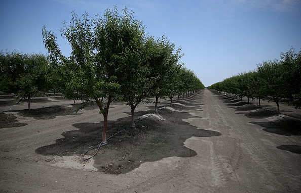 Tree「California's Central Valley Heavily Impacted By Severe Drought」:写真・画像(17)[壁紙.com]