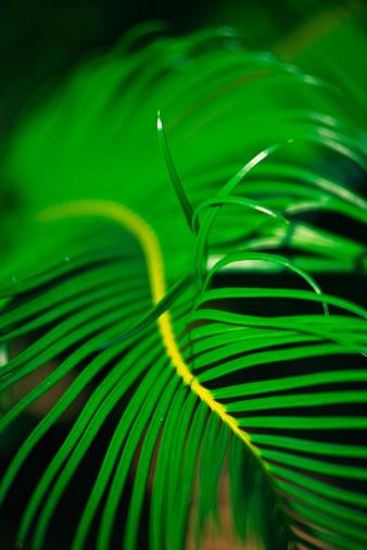 Frond「Vibrant green fern」:スマホ壁紙(6)