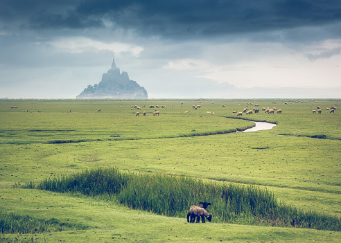 Monastery「Sheep in field in front of Mont Saint-Michel, Normandy, France」:スマホ壁紙(13)