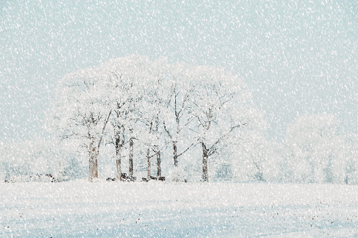 Snowdrift「Snow landscape with frosted trees」:スマホ壁紙(2)