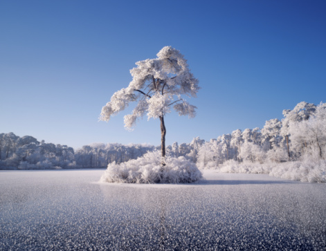 North Brabant「Frozen lake in forrest with island and trees completely covered with hoarfrost.」:スマホ壁紙(8)