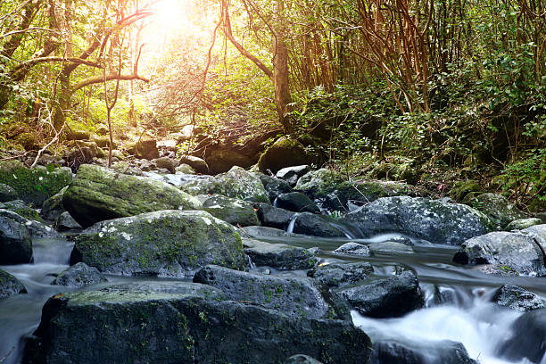 Black River Gorges National Park:スマホ壁紙(壁紙.com)