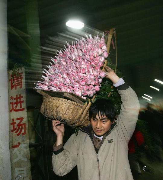 Cancan Chu「The Largest Fresh Flowers Trading Center of China In Kunming」:写真・画像(16)[壁紙.com]