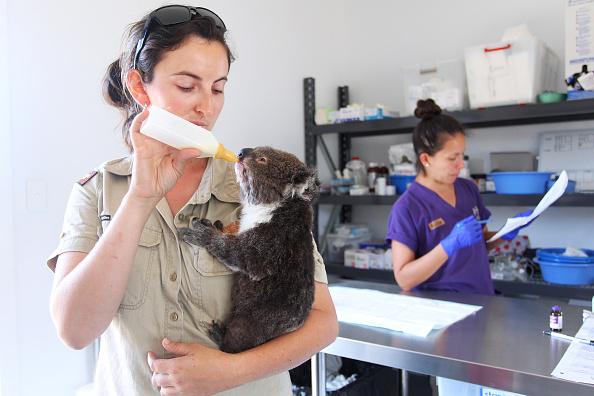 animal「Kangaroo Island Begins Recovery Process Following Devastating Bushfire Season」:写真・画像(8)[壁紙.com]